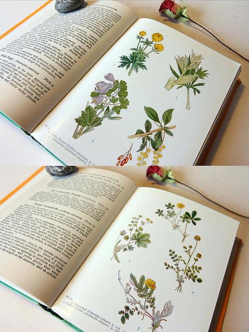 Book of Wild flowers yellow