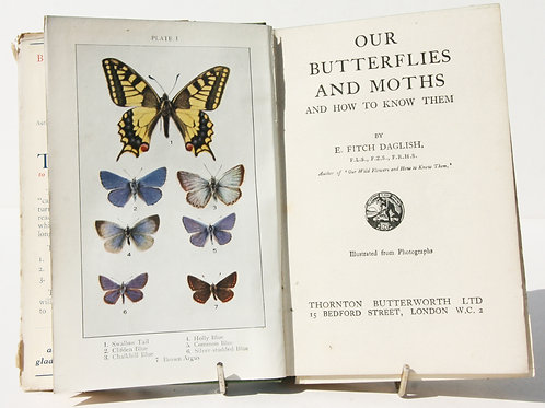 Butterflies And Moths In Britain