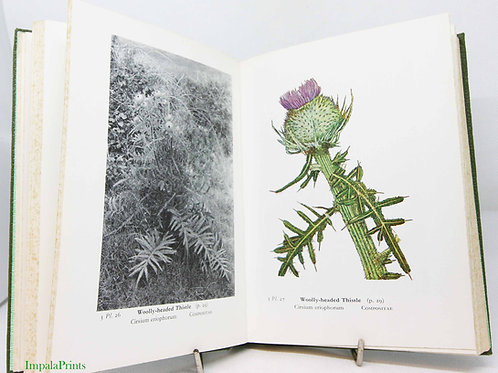 Vintage Flower Book Wayside and Woodland Blossoms Illustrated 1960s Guide Flower
