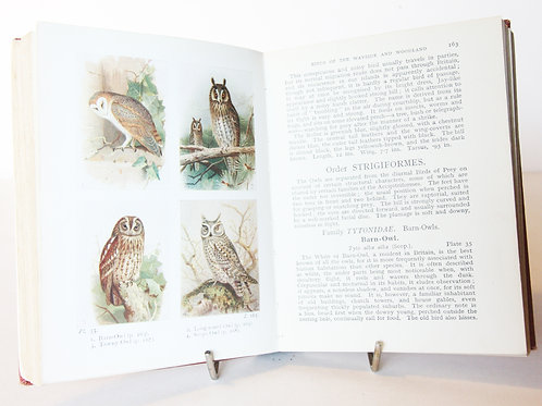 Birds of the British Isles Wayside and woodland 1941 Bird Spotting, vintage Boo