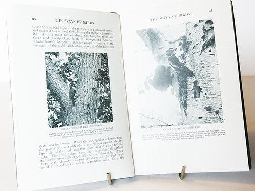The Way of Birds Arthur Thomson Migration & Habits 1930s Bird Spotting, vintage