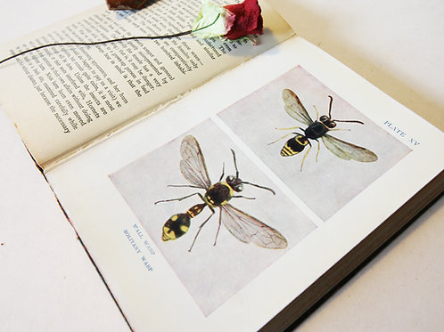 Insect Book For Childrens Illustrated