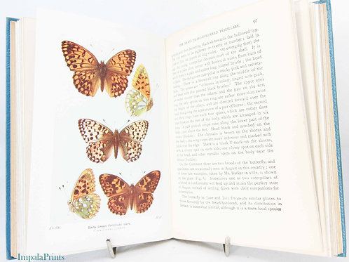 Butterflies & Moths Of The United Kingdom Antique - Colour plates Vintage Hardba