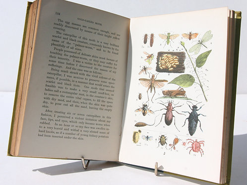 Illustrated Nature Book Colour plates Book