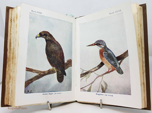 Bird Book Antique Illustrated Color pictures Antique Vintage childrens Ornitholo