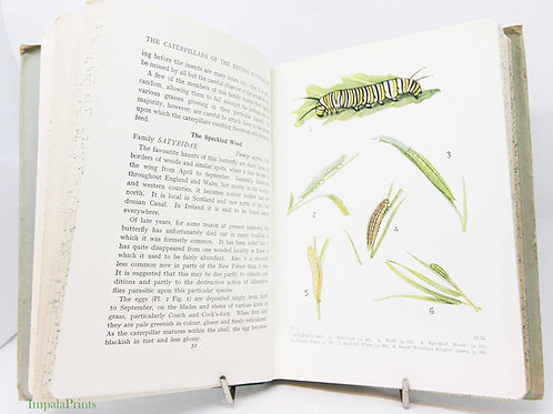 Caterpillars of the British Butterflies- Colour plates Vintage Hardback 1940s Na