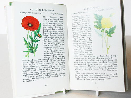 Wild Flowers Illustrated Plants Flower Picture