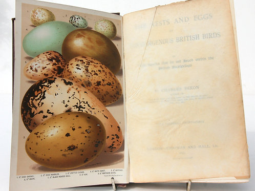 Eggs and Nest Bird books Guide Book Vintage