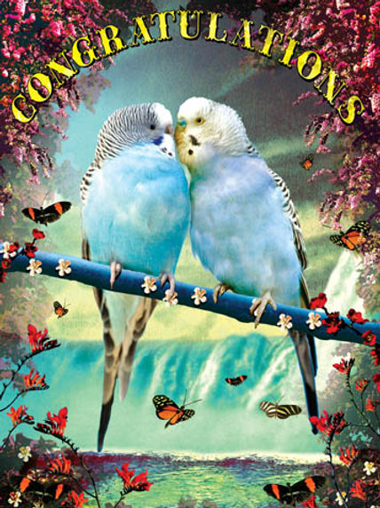 Congratulations Bird Card