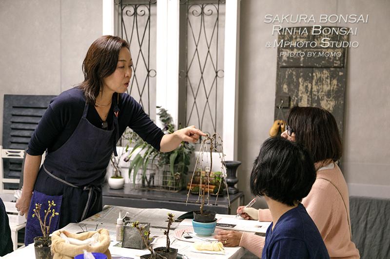 桜盆栽WS_20200314