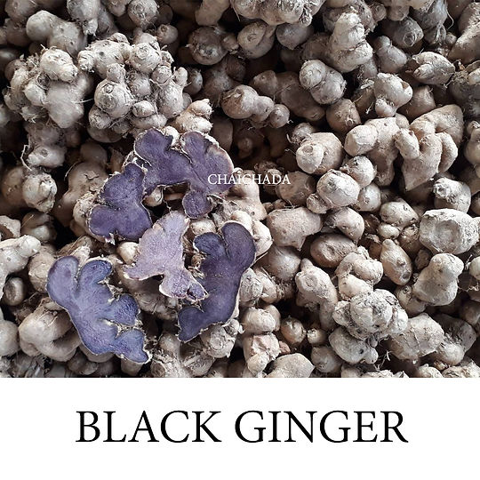 กระชายดำ BLACK GINGER CHAICHADA 5.jpg