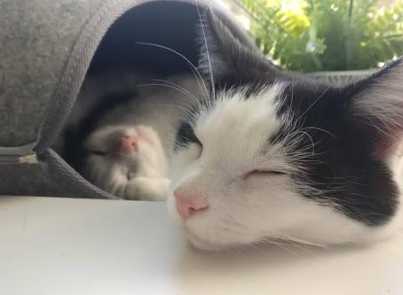 Die Geschichte meiner Katzen