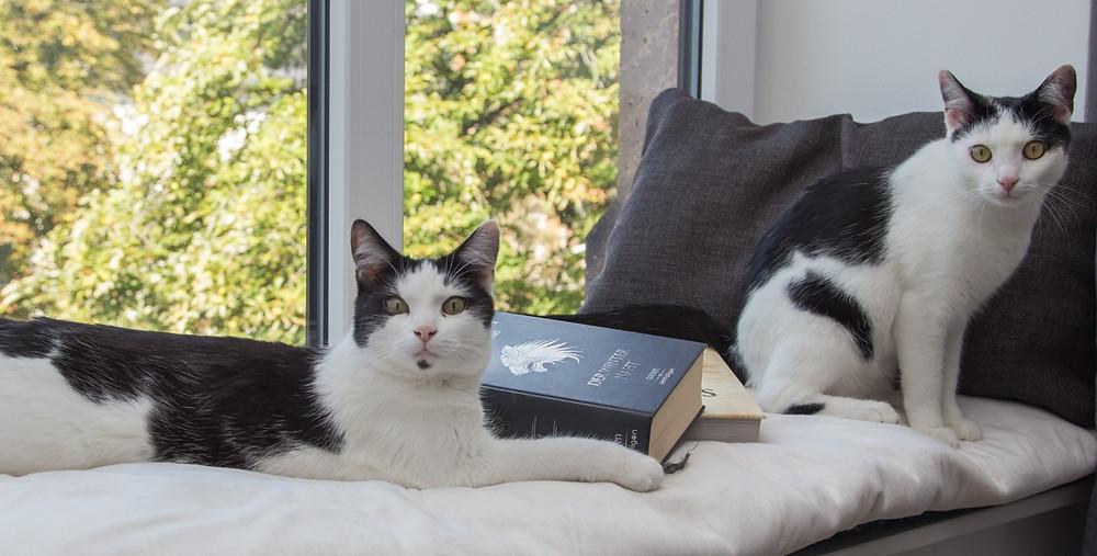 Meine Katzen Dylan und Delta