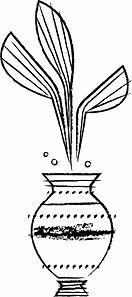 VANCAI_WEBGALLERY_PLANT.jpg
