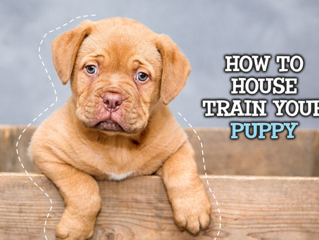 How to Housetrain Your Puppy