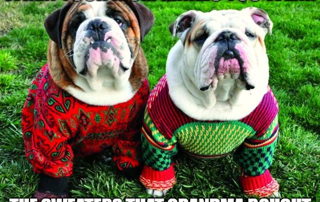 Should Your Dog Be Wearing A Sweater? (And Other Cold Weather Wear)