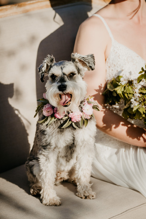 Rules of Having Pets at Your Wedding