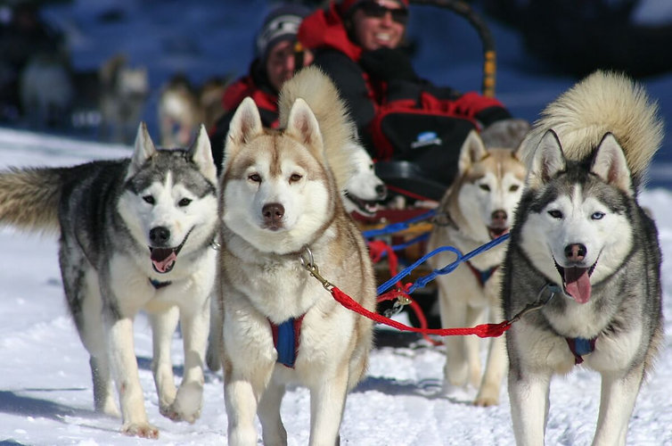 canada_on_halliburton_dogsled_original.j