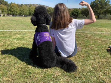 RAD Dog Lew provides psychiatric and light mobility assistance to his handler who is living with Fibromyalgia.