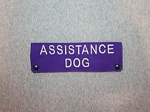 leash sleeve assistance dog.jpg