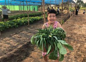 Veggie Farm Pick-Your-Own
