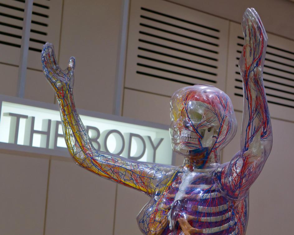 Art of Body Labguage