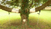 Forêt magique. Arbre habillé, arbre malade. Réalisé à l'Ime de Vincelles.