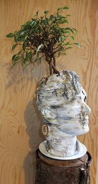 Un arbre dans la tête