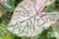 The Plant Show front1.jpg