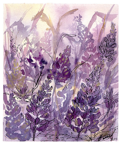 Lupine - Limited edition print