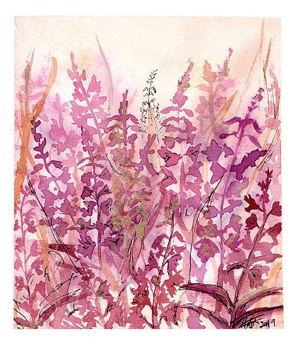 Fireweed limited edition print