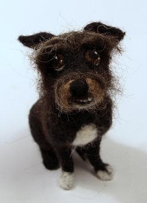 Dunn mix terrier