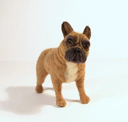 French Bulldog Torri