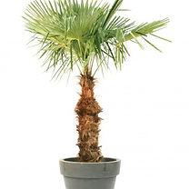 RIKILA EVENTS Paris Location palmier pas cher