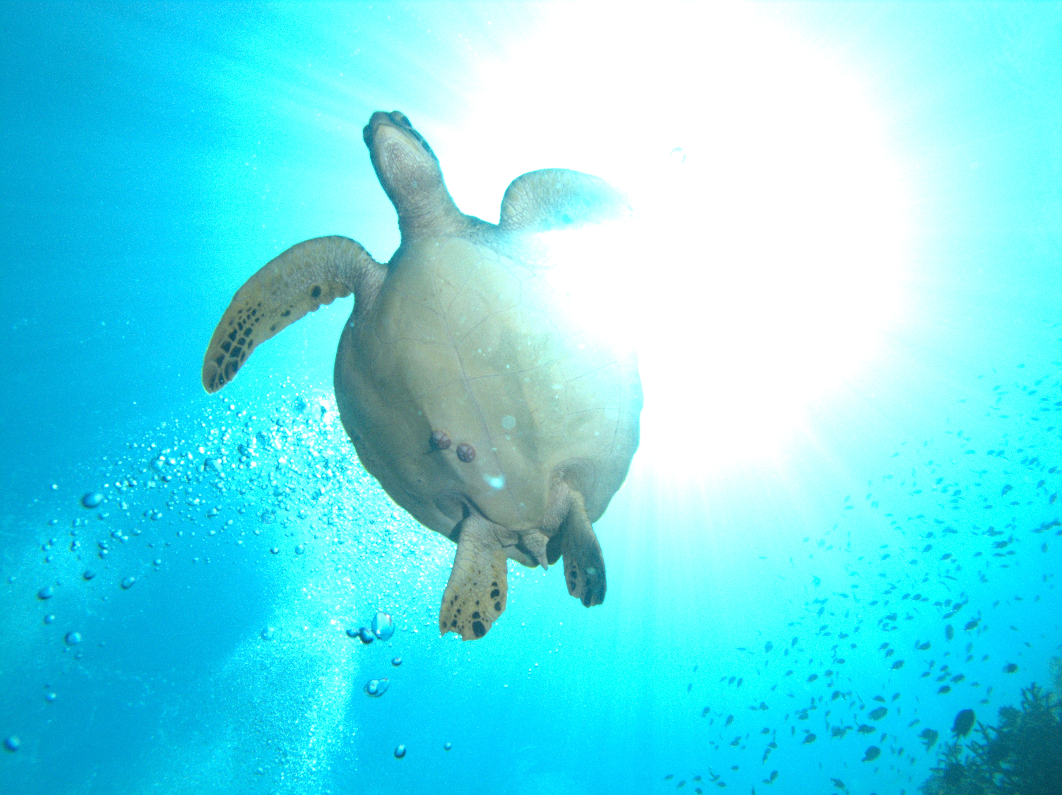 Dive Trip and Guide