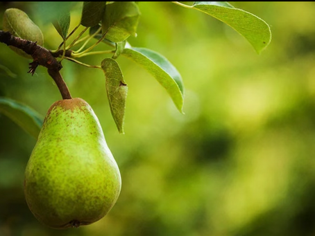 ¿Cuáles son los principales beneficios de comer peras?