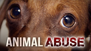 NC LAWMAKERS TO VOTE ON A PUBLICLY ACCESSIBLE ANIMAL ABUSE REGISTRY