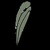 PACHIRA-ILLIS-03.png