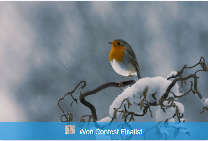 Image of the month finalist (again)