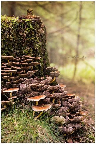 svampar_på_stubbe_wix.jpg