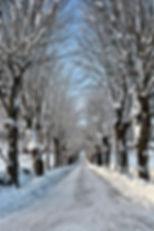 Vinterallén