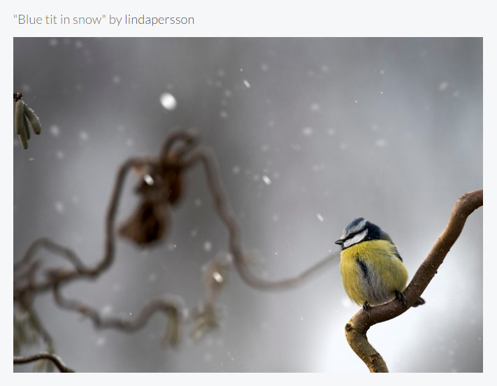 Image of the month Finalist Feb 2017 Viewbug