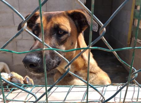 Do good photography - Dog rescue shelter