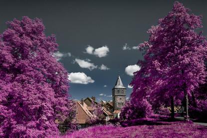 Hobbingen purple