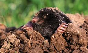 Artificial Grass Moles