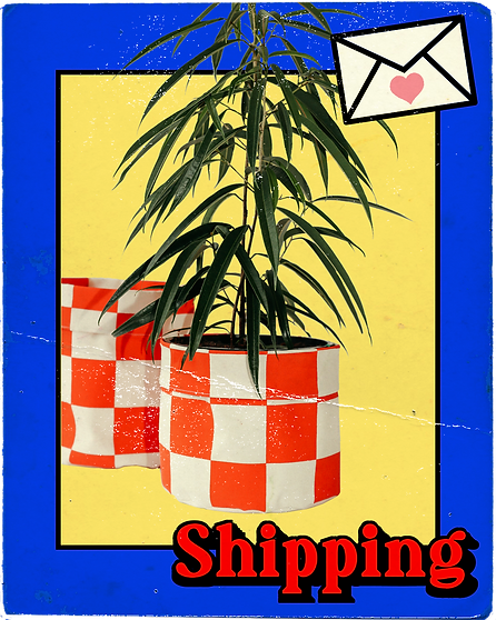 trading card 23.png