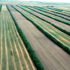 Wind breaks in arable production system