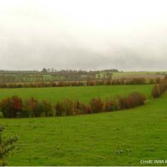 'Bocage' hedges in France
