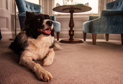 Pet Friendly Hotel