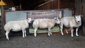 Excellent Review for DN Pro-Lamb from Ivanhoe Livestock